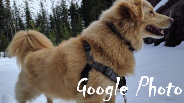 【Googleフォト】人間と同様にペットの個体認識でグループ化が可能に!