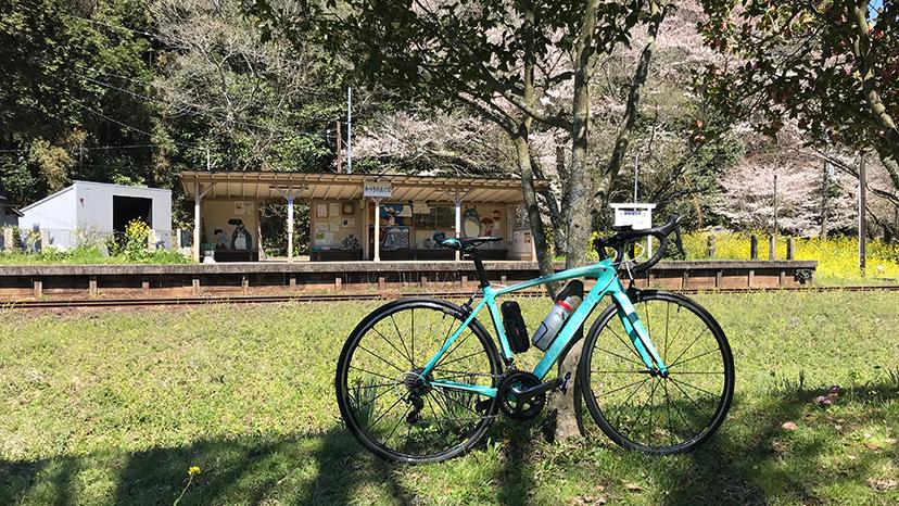 【ロードバイク】小湊鉄道は花盛り【花見ポタ】